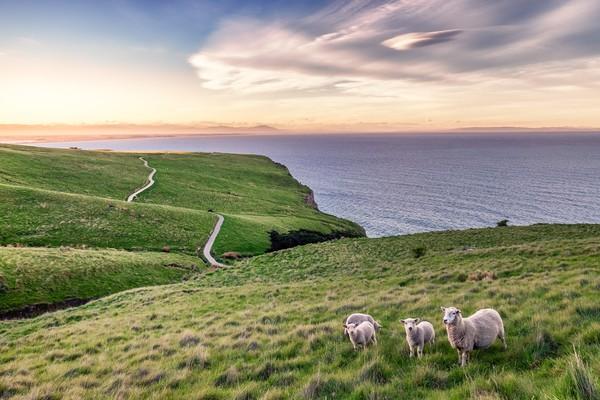 Meski liar, tak sedikit wisatawan yang bisa bercengkrama dengan mereka saat melintas. (Getty Images/iStockphoto)