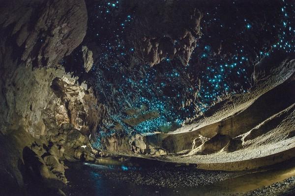 Glowworm ini tidak boleh kena banyak cahaya. Cahaya hanya akan mengganggu mereka. (Getty Images/iStockphoto)