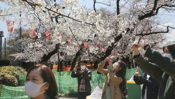 Tak hanya di Tokyo, momen mekarnya bunga sakura juga dapat dilihat di Wuhan, Seoul dan Pulau Jeju di Korea Selatan, hingga Taichung dan Nantou di Taiwan.