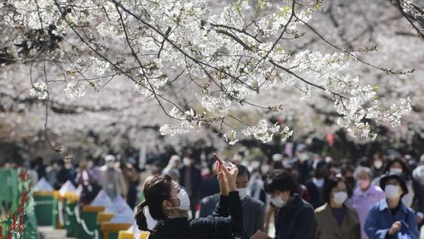 Seorang pengunjung mengambil foto bunga sakura di Tokyo, Selasa (23/3/2021) waktu setempat.