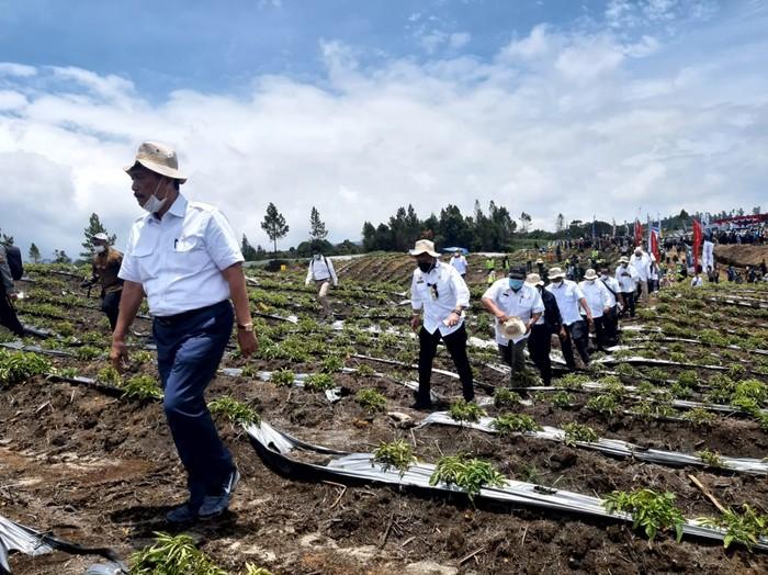 Menteri Koordinator Bidang Kemaritiman dan Investasi (Menko Marves) Luhut Binsar Pandjaitan meninjau kawasan food estate di Kabupaten Humbang Hasundutan (Humbahas), Sumatera Utara,
