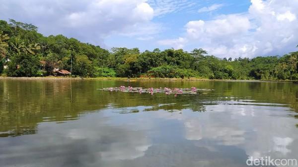 Situ Wangi ini terletak di Dusun Hayawang, Desa Winduraja, Kecamatan Kawali, sekitar 20 kilometer dari Kota Ciamis. Penampakan danau ini cukup cantik dan menyejukkan mata. (Dadang Hermansyah/detikTravel)