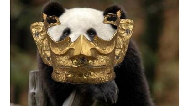 Tagar Kompetisi pengeditan foto topeng emas Sanxingdui pun trending dan dilihat hampir 4 juta kali. Tagar ini pun melahirkan banyak postingan karena netizen memuji topeng yang memukau dan indah ini.