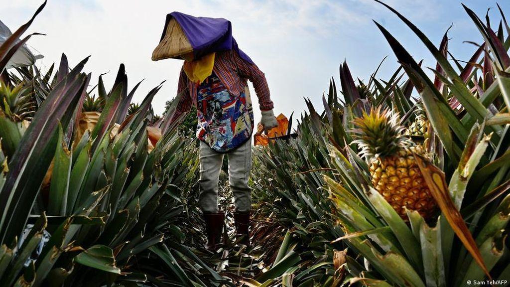 China Tekan Taiwan dengan Boikot Nanas, AS Pantau Ancaman Serangan China