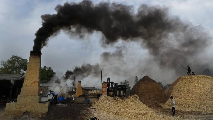 A woman carries discarded sugarcane fibre, obtained after extracting the juice to make jaggery, on the outskirts of Bareilly, India, Tuesday, March 23, 2021. Jaggery is a traditional unrefined sugar consumed in many parts of Asia, made from molasses of sugarcane and date palm sap. (AP Photo/Rajesh Kumar Singh)