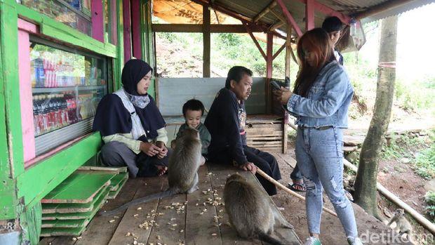 Monyet ekor panjang di obyek wisata Karang Gantungan