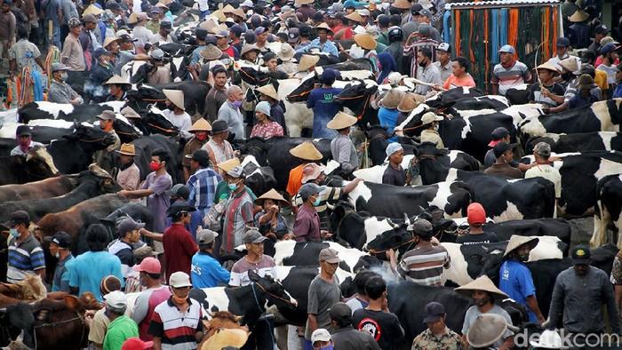 Pasar hewan di kawasan Boyolali ini kerap didatangi warga untuk melakukan transaksi jual beli sapi. Menariknya pasar hewan itu hanya buka setiap pahing.