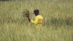 Pupuk Berimbang, Upaya Kementan Dorong Produksi Pertanian RI