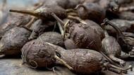 Kacang Kentang, Sayuran Tinggi Serat yang Menyehatkan Asal Amerika