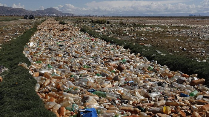 Flamingos feed in Uru Uru Lake, a few miles from an area completely covered in plastic bottles and other garbage near Oruro, Bolivia, Thursday, March 25, 2021. (AP Photo/Juan Karita)
