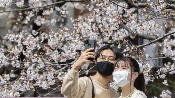 Musim semi kerap ditandai dengan bermekarannya bunga sakura. Getty Images/Yuichi Yamazaki