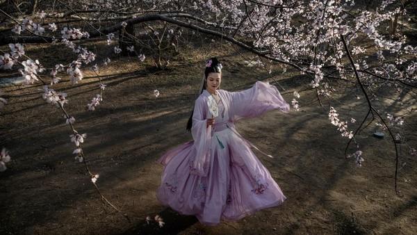 Seorang wanita Tionghoa mengenakan pakaian tradisional, atau hanfu, di bawah pohon sakura di Beijing, China. Getty Images/Kevin Frayer
