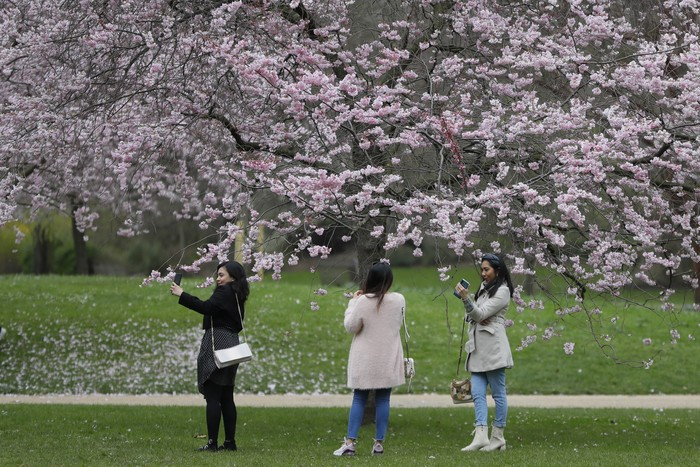 Women photograph cherry blossom in St Jamess Park as the lockdown continues in London, Tuesday, March 23, 2021. A year to the day since Prime Minister Boris Johnson first put the country under lockdown to slow the fast-spreading coronavirus, a national day of reflection is being organized to remember the people who died after contracting COVID-19. (AP Photo/Kirsty Wigglesworth)