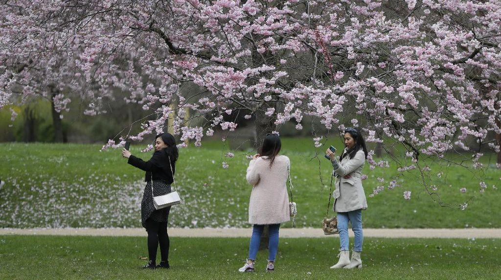 4 Musim di Jepang Berdasarkan Bulan, dari Semi hingga Dingin