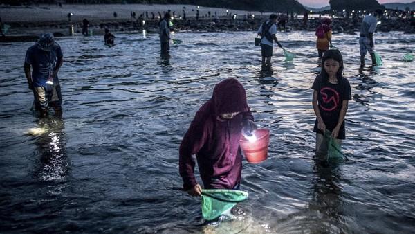 Setiap tahun masyarakat Lombok itu berbondong-bondong untuk menangkap Nyale di Pantai Seger, Kawasan Ekonomi Khusus (KEK) Mandalika di Kuta, Praya, Lombok Tengah.