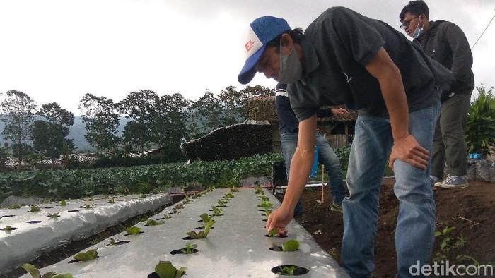 Petani Milenial Lembang Bandung