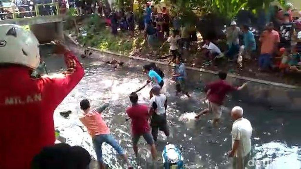 Penangkapan Ular Sanca 4 Meter di Kota Pasuruan hingga 2 Orang Kena Gigit