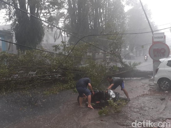 Pohon tumbang menimpa seorang pengendara motor di Jalan Jawa, Kelurahan Sumbersari, Kecamatan Sumbersari. Pohon tumbang akibat hujan disertai angin kencang yang terjadi sekitar pukul 15.30 WIB.
