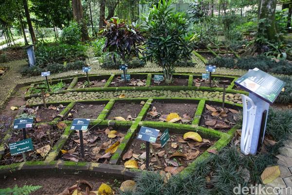 Selain itu, di taman ini juga ada tumbuhan-tumbuhan yang memiliki khasiat untuk pengobatan, seperti jahe, temulawak, dan sebagainya.