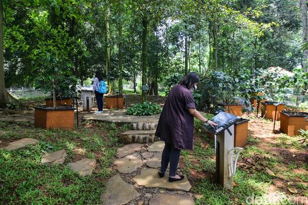 Traveler yang doyan ngopi tapi belum pernah melihat langsung pohon kopi, bisa menengoknya di Taman Kopi.