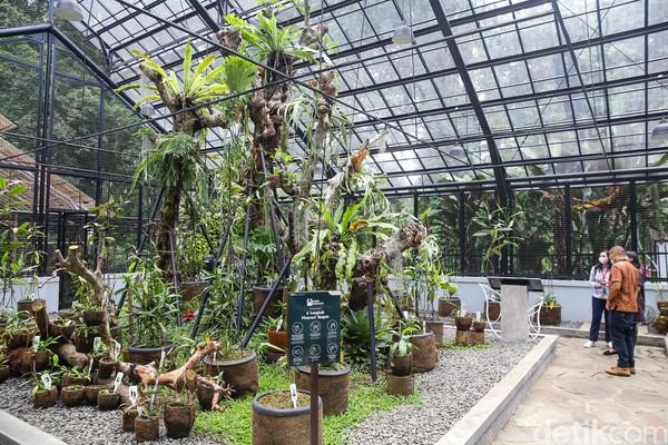 Taman tematik ini baru dioperasikan pada tahun 2020. General Manager Kebun Raya Bogor Marga Anggrianto menjelaskan kepada detikcom, pembangunan taman ini merupakan kerja sama dengan Pertamina. Tujuannya adalah untuk mempercantik dan edukasi wisata.