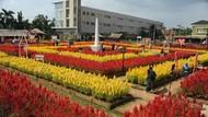 Warna-warni Taman Bunga Celosia di Palembang