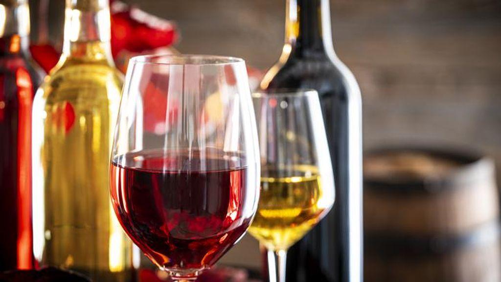 Niat Bikin Wine Ular, Pria di China Malah Kritis Kena Bisanya