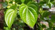 Pengertian Fotosintesis dan Prosesnya pada Tumbuhan