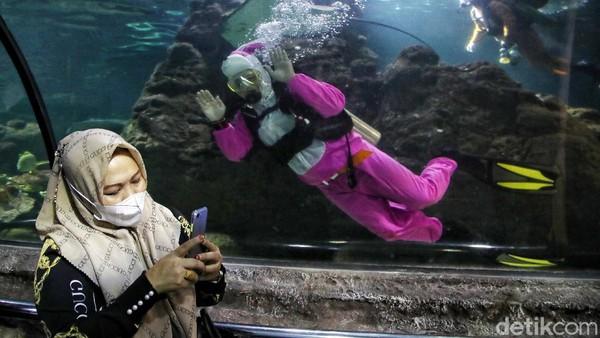 Dalam atraksi tersebut para penyelam mengenakan kostum mulai dari kelinci laut hingga penyu. Perlu diketahui kelinci laut yang memiliki nama nudibranch Ini merupakan biota laut yang unik. Kelinci laut memiliki corak warna-warni yang lucu yang menarik perhatian pengunjung.