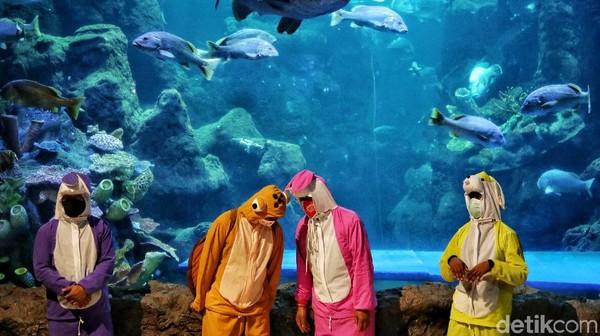 Dalam atraksinya, anak-anak akan diajak untuk mengarahkan keluarga kelinci sebagai tokoh baik, untuk menyelamatkan telur penyu di dalam aquarium.