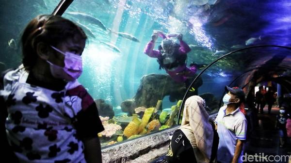 Melalui atraksi tersebut, pengunjung akan diberikan edukasi untuk menjaga kelestarian ekosistem laut dengan tidak membuang sampah ke lautan serta tidak melakukan perburuan dan memakan telur penyu.