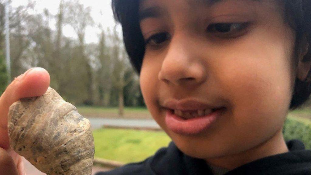 Bocah 6 Tahun Temukan Fosil Jutaan Tahun di Kebun Belakang Rumahnya