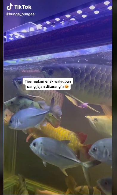 Uang Jajan Dikurangi, Wanita Ini Tetap Bisa Makan Mewah  Ikan Arwana Bakar