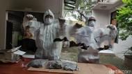 156 Unggas Positif Flu Burung dan 14 Telur Busuk Asal Taiwan Dimusnahkan