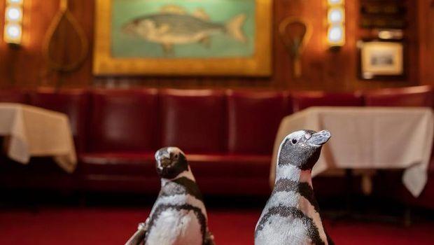 Saat Penguin Kampanyekan Gerakan Kurangi Plastik Sekali Pakai