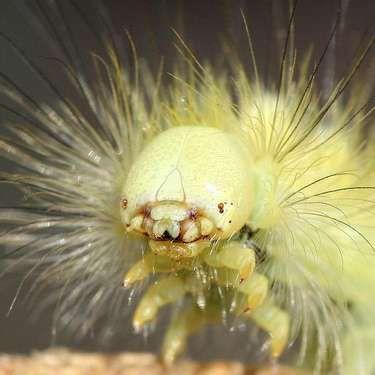 Serangga dan Ulat Ini Sering Dimakan Manusia Tanpa Disadari
