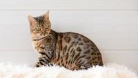 Pria Jepang Ini Dideportasi Setelah Makan Anak Kucing