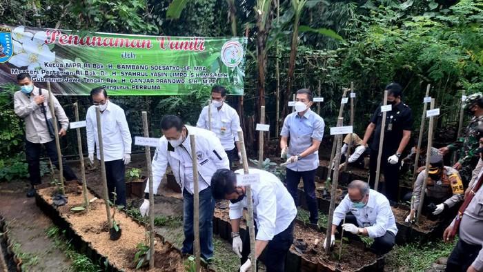 Mentan Syahrul Yasin Limpo dan rombongan menanam vanili di sentra petani vanili Salatiga, Sidomukti, Rabu (31/3/2021)