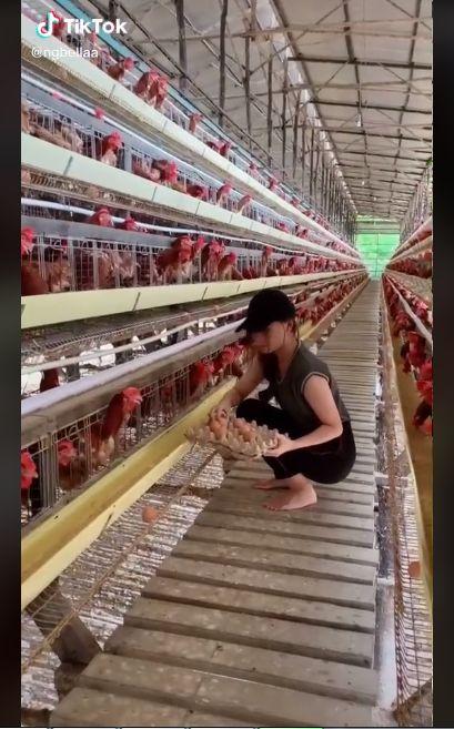 Sosok Peternak Ayam Cantik Ini Mirip Kisah di FTV