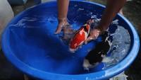 Cerita Pembudi Daya Ikan: Gara-gara Melek Teknologi, Bisnis Naik 2 Kali Lipat