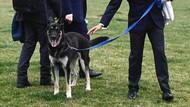 Duh, Anjing Joe Biden Gigit Staf Gedung Putih Lagi