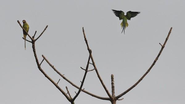 Daftar periksa saat ini mencakup 407 spesies burung, di antaranya Bengal florican, burung bangkai putih, merak jantan, dan angsa berkepala batang, yang merupakan simbol taman dari taman tersebut.