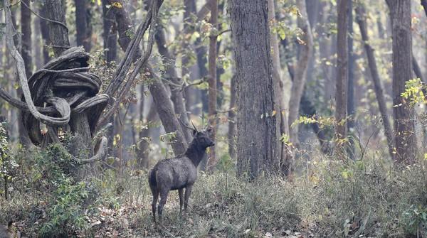 Sekitar 70% taman ini tertutup hutan, dengan keseimbangan campuran padang rumput, sabana dan hutan sungai.