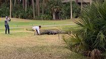 Pegang-pegang Ekor Buaya Saat Main Golf, 2 Pria Ini Dicari