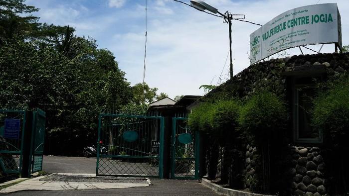 Pandemi COVID-19 tidak hanya mencekik geliat dunia pariwisata, perhotelan, dan bisnis hiburan di DI Yogyakarta. Pandemi juga berdampak terhadap keberlangsungan tempat rehabilitasi satwa liar di Wildlife Rescue Centre (WRC) Jogja, sebuah organisasi nirlaba dibawah Yayasan Konservasi Alam Yogyakarta (YKAY) yang berada di Pengasih, Kulon Progo, DI Yogyakarta.