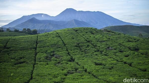 Begini suasana pagi di kampung Cikoneng, Bogor, Senin (29/3/2021). Kampung yang mayoritas pekerja kebun teh ini memiliki pemandangan yang sejuk kala pagi.