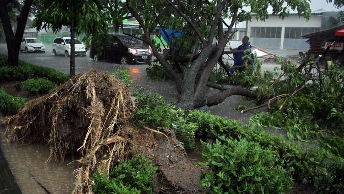 Pengendara motor melintasi pohon tumbang yang menutup ruas jalan di Kecamatan Somba Opu, Kabupaten Gowa, Sulawesi Selatan, Jumat (2/4/2021). Angin kencang disertai hujan deras yang terjadi pada Jumat (2/4) dini hari mengakibatkan sejumlah pohon tumbang di daerah itu. ANTARA FOTO/Arnas Padda/yu/rwa