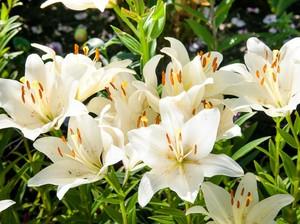 Lebaran 2021, Bikin Rumah Cantik dengan 5 Tanaman Hias Bunga Ini