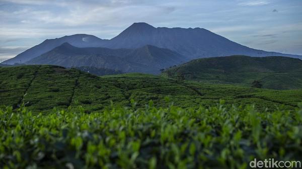 Pesona kebun teh dan pemandangan Gunung Gede Pangrango membuat betah berlama-lama sekedar melapas penat walau pademi belum usai sepenuhnya. Sajian pesona perkebunan teh ini dapat kita nikmati di desa Tugu Utara, Kab Bogor, Jawa Barat,