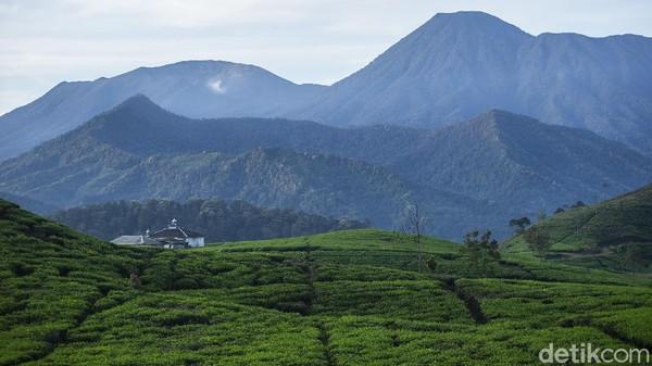 Gugusan panorama Gunung Gede Pangrango tersaji indah ditambah dengan udara yang sejek manambah berlama-lama. Berada tepat di kaki Gunung Kencana, pemandangan di lokasi ini dapat melihat Gunung Gede Pangrango.